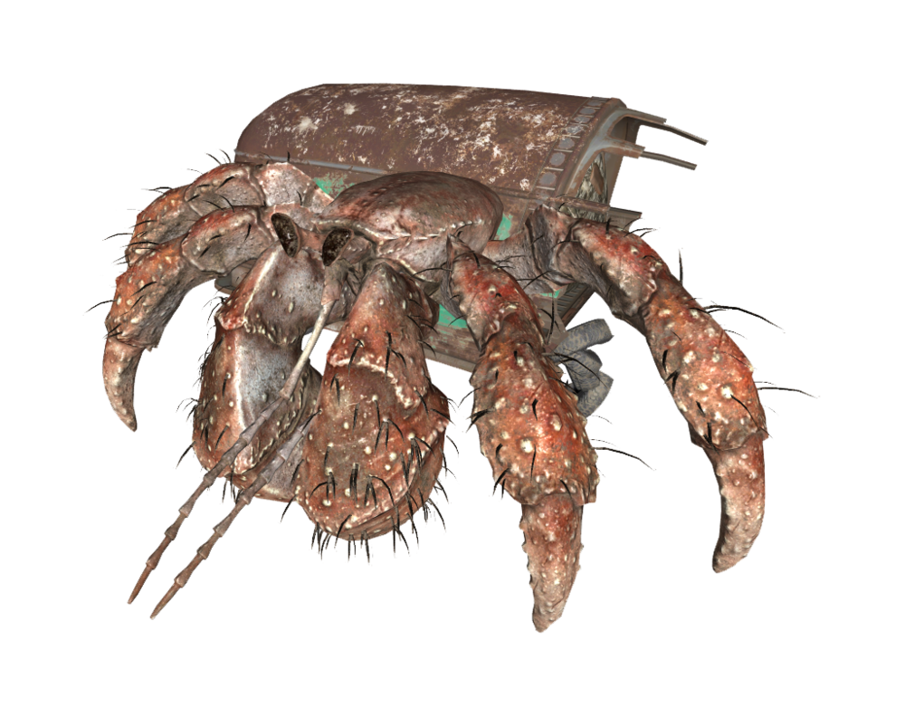 HermitCrab.png