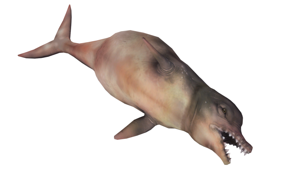 RadDolphin.png
